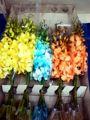 blanco teñido de orquídeas