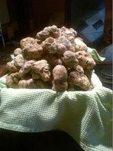 Tuber magnatum pico - White truffle