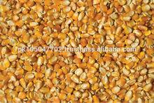 Yellow Corn / Maiz