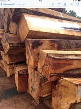 Rosewood/Pterocarpus indicus