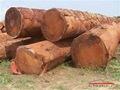 Autres bois Type africaine tropical bois 9 mm contreplaqué feuille