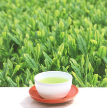 High quality and healthy japanese tea drinks and flavors