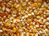 Yellow Corn Maize wholesale pakistani brand superior quality