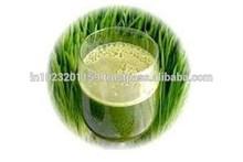 wheat grass/Triticum aestivum /grass drinks/organic grass/pure natural grass powder/ herbs of various grass