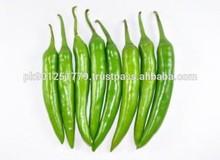 Hot Fresh big green chilli the green chili Fresh Green Chili fresh red and green chili