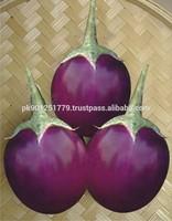 Round Eggplant , Solanum melongena , Baingan Bengan , Aubergines , Fresh brinjal , melongene, garden egg , guinea squash
