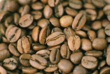 Luwak coffee roasted bean