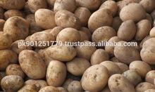 A Grade Potatoes for Europe Market , Fresh Potato from Pakistan to Export Asia , Europe , America