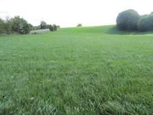 Silage Grass