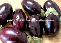 Fresh Purple Aubergines , Eggplant , export to Mexico , Japan , South africa , Saudia arabia , Dubai , Qatar , Australia ,