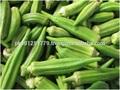 Verde signora dito, Gombo, freschi della fattoria signora dito/gombo dal pakistan, migliore signora dito per esportatori dal pakistan