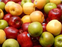 fresh apple,apple fruit fresh,bulk fresh apples
