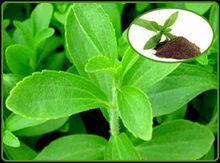 Stevia Extract and Stevia Rebaudiana Bertoni