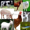 Moutons. Les bovins, des chèvres, chameaux, les porcs, henns, canards, dindes