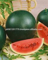 Fresh Big Raw Green Peel Red Meat Water melon , GIANT EMPEROR Hybrid Watermelon , High Disease Resitant Watermelon