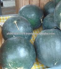 FRESH WHITE WATER MELON WATERMELON , Top Grade Fresh Watermelon , Pakistani water melon exporter manufacture