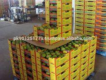 Best taste pakistani mangoes exporter , Tasty fruit mango , Aam , Delicious awesome mango