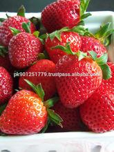 Fresh red strawberries from Pakistan , Fresh Sweet Best Quality Strawberry , Bulk Strawberries