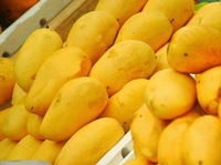 Fresh Sweet Sindhri Mango , Delicious Sindri Mangoes , Pakistan Sindhri Mango