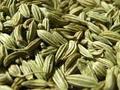 American graines de fenouil qualité pour l'algérie