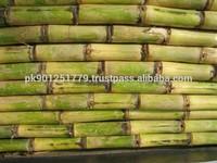Fresh Sugar cane , Sugar cane bulk price , Sweet sugar cane . Delicious Sugarcane