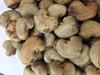 WW 450 Grade Cashew Nut