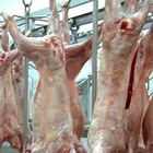 High Quality Frozen lamb/goat/mutton whole carcass 4 / 6 /10 way cuts
