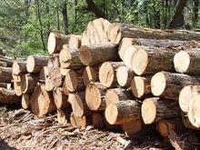 IROKO African hardwood logs