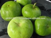 Tinda , Tinday , Indian round gourd or apple gourd or Indian Baby Pumpkin