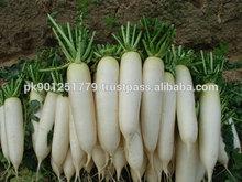 Long white radish seeds , Super quality F1 Hybrid White radish seeds