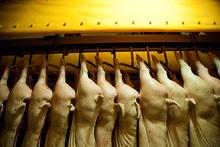 Full Body Pork export from Nepal
