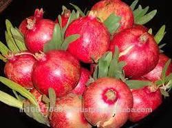 import fresh fruit