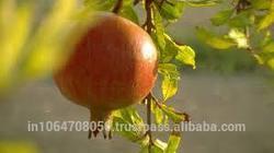 wholesale pomegranate fresh fruit