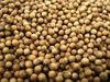 Best quality coriander seed