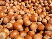 Hazelnuts sale good price