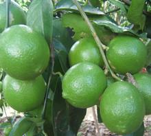 Viet Nam green fresh lemon seedless