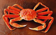 LIve Snow crab | Fresh and Frozen