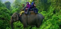 3 Nights 4 Days Jungle Safari