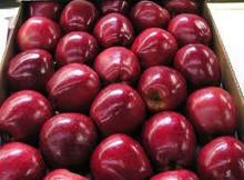 big 2014 NEW fresh gala apple for sale in Bulk