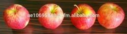 Apples - Gala Royal Low Price