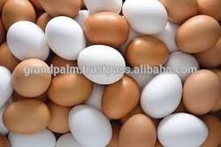 Fresh Eggs in bulk
