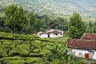 2300 Ac Tea/Coffee estate for sale