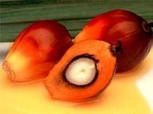 Malaysia Quality RBD Palm Oil