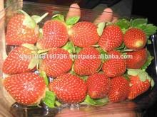 egypt fresh strawberry