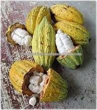 Raw Dried Cacoa Beans