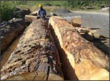 Douglas Fir Logs Softwood 45