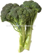 Wholesale IQF Frozen Broccoli Price