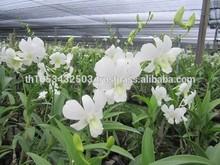 natural orchids flower plants