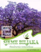 Paulownia tomenthosa - 100 seeds
