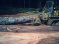 nós somos fornecedores de africano toras e madeira serrada madeira serrada